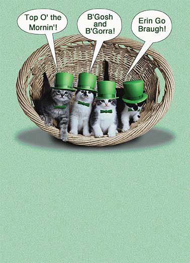 Irish Kittens Funny St. Patrick's Day Card